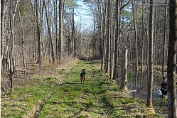 dogs_on_chip_trail_-_cropped.jpg