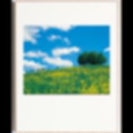 3-4月 菜の花咲く牧場