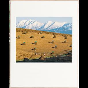 収穫の丘(9月-10月)