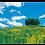 Thumbnail: 菜の花咲く牧場(3月-4月)