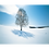 Thumbnail: 白樺樹影(11月-12月)