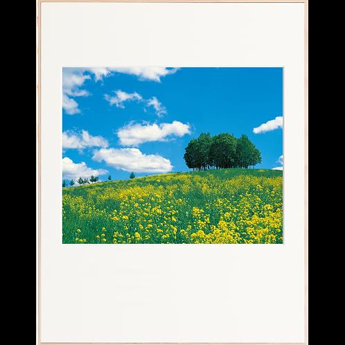 菜の花咲く牧場(3月-4月)