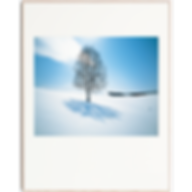 11-12月 白樺樹影