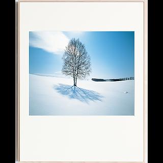 白樺樹影(11月-12月)