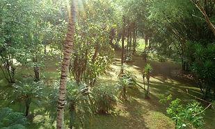 bamboo-289149_1920.jpg
