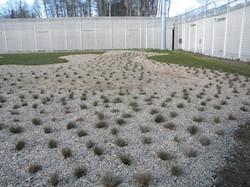 plantation graminées