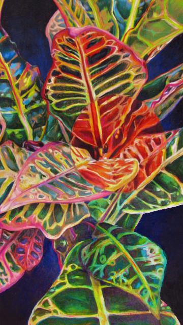 Crotons (2017)