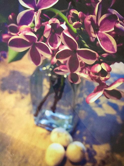 White Edged Lilac