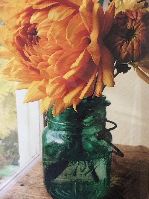 Dahlia in Mason Jar