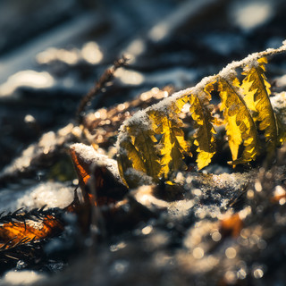 A golden feather