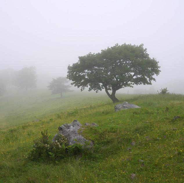 """""""Foggy hill"""""""