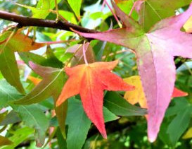 The Love Of All Things Autumnal *Plus A Free Autumn Leaf Tutorial*