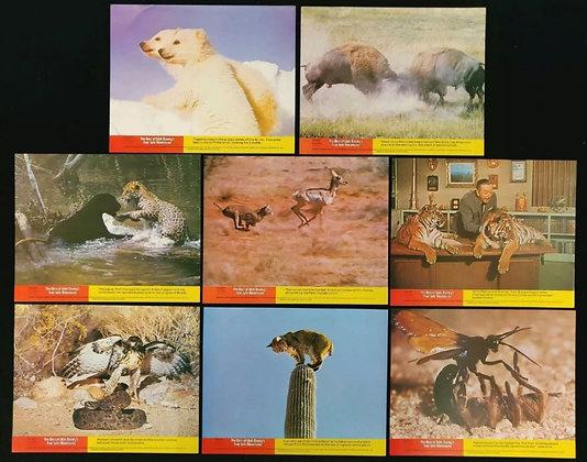 The Best of Walt Disney's True-Life Adventures UK Lobby Card Set Of 8 - 1975