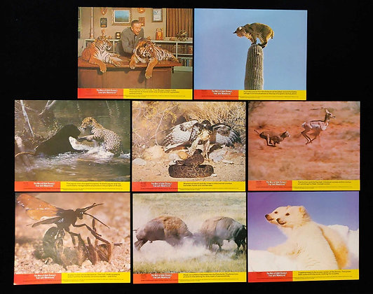 The Best of Walt Disney's True-Life Adventures Front of House/Lobby Cards (x8)