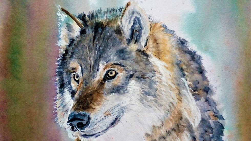 Portrait of a Wolf, watercolour Spirit Animal painting,