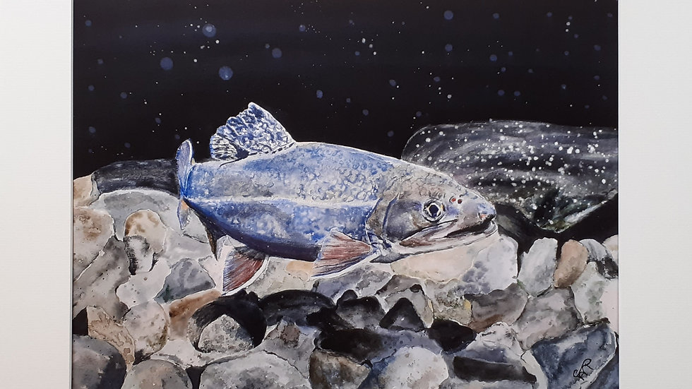 Magical Salmon  limited edition print, full image.