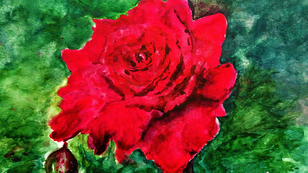 A Velvet Rose, watercolour painting, red rose and rose bud, full image.