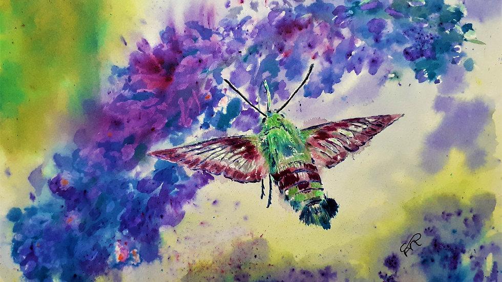 Full image of Hummingbird Hawkmoth, mixed media, original painting.