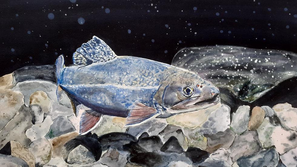 Magical Salmon, original watercolour painting, full image.