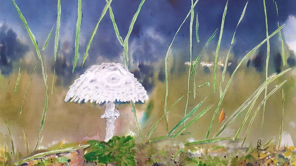 Parasol Mushroom, full image, watercolour painting