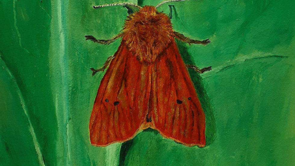 Ruby tiger Moth on a green leaf.