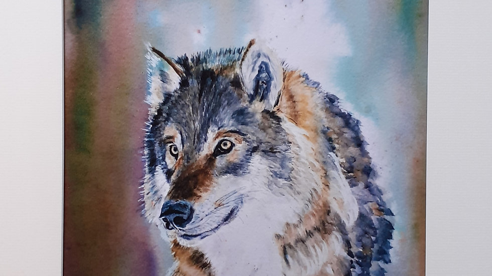 Portrait of a Wolf, limited edition, mounted print, full image.