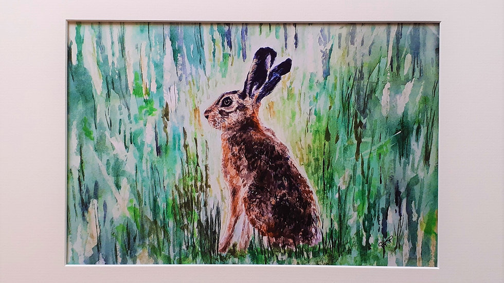 Young hare in grass Limited edition print.