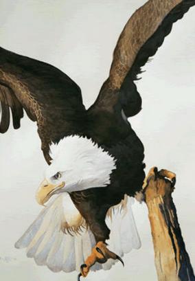 Eagle Giclee Print