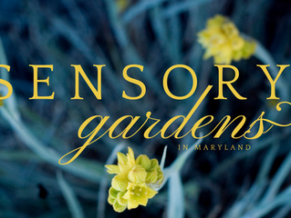 Top 4 Sensory Gardens in Maryland to see before Summer Ends