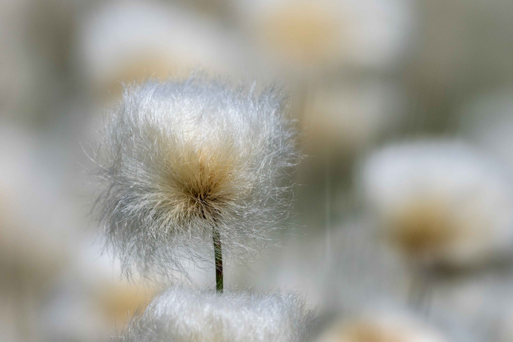 5.Fleur.jpg