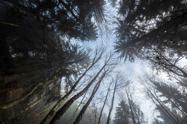18.Forêt.jpg