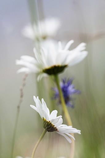 Fleursweb.jpg