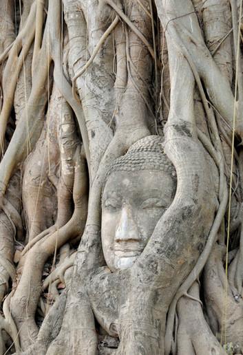 2.Boudha-arbre-Cambodge.jpg