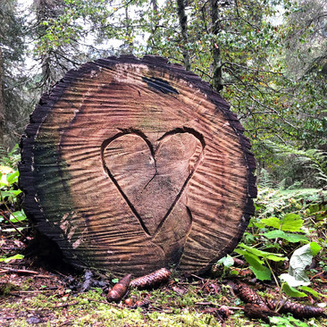 Un coeur dans la forêt