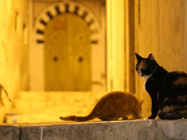 Chats de mille et une nuit....