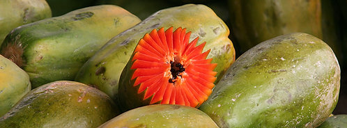 Etoile papaye
