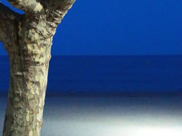 Le tronc, la mer, un soir