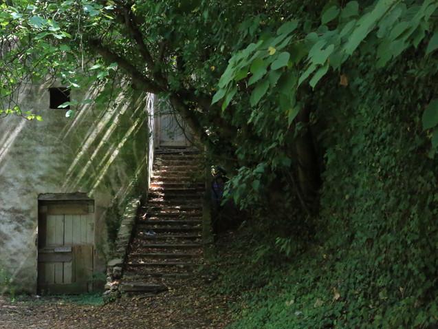 Escalier en sous-bois