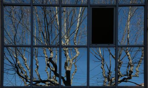 Arbres aux fenêtres