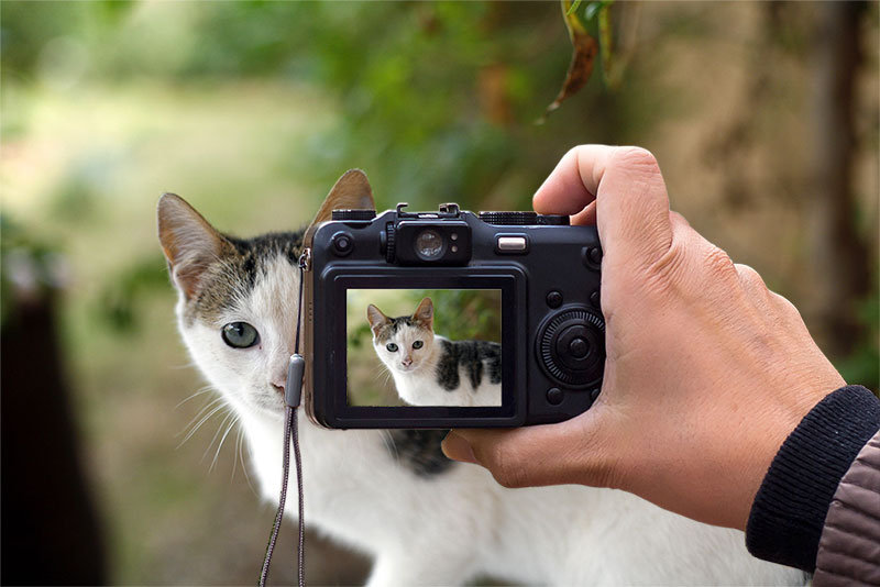 kittyoncam.jpg