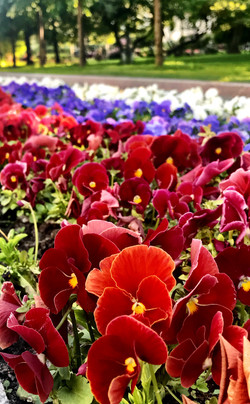 Patriot Flowers @ Alexander Gardens
