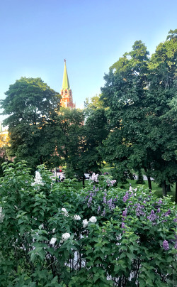 Lilac Trees in Moscow