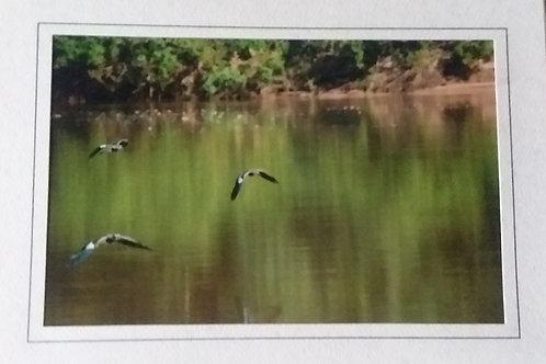 Birds Blank Greeting Card