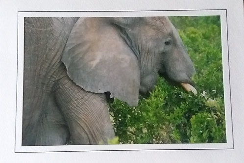 Set of 4 Wildlife & Nature Blank Greeting Cards