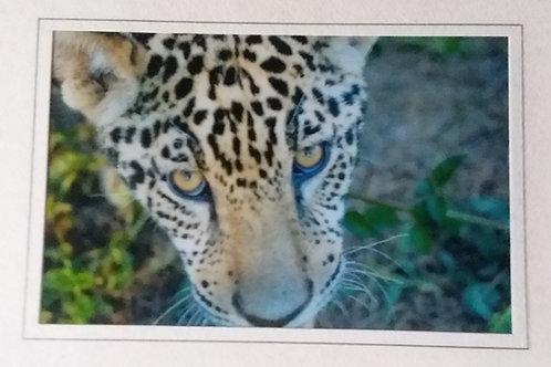 Jaguar Cub Blank Greeting Card