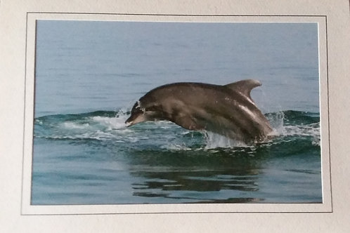 """Bottlenose Dolphin"" Blank Greeting Card"