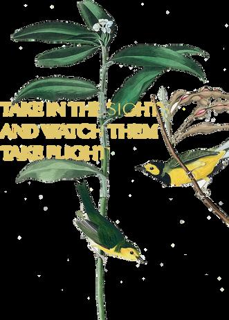 songbirds.png
