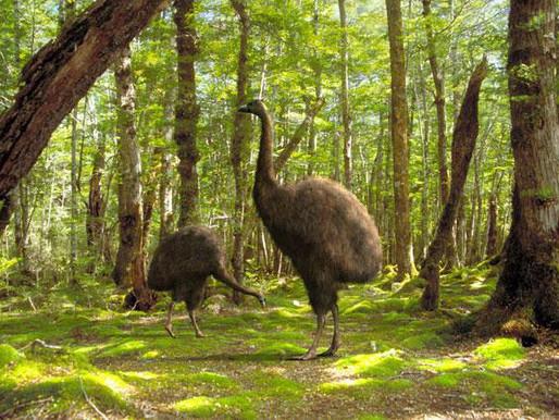 Моа – найбільший птах на землі