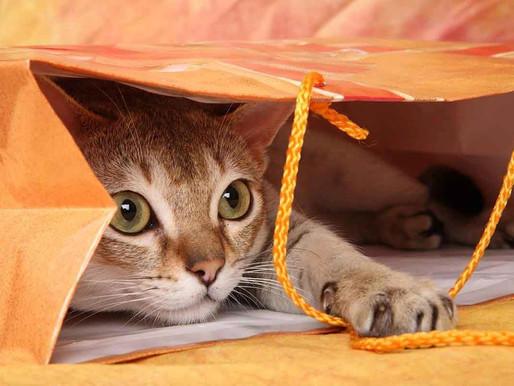 10 цікавих фактів про характер котів