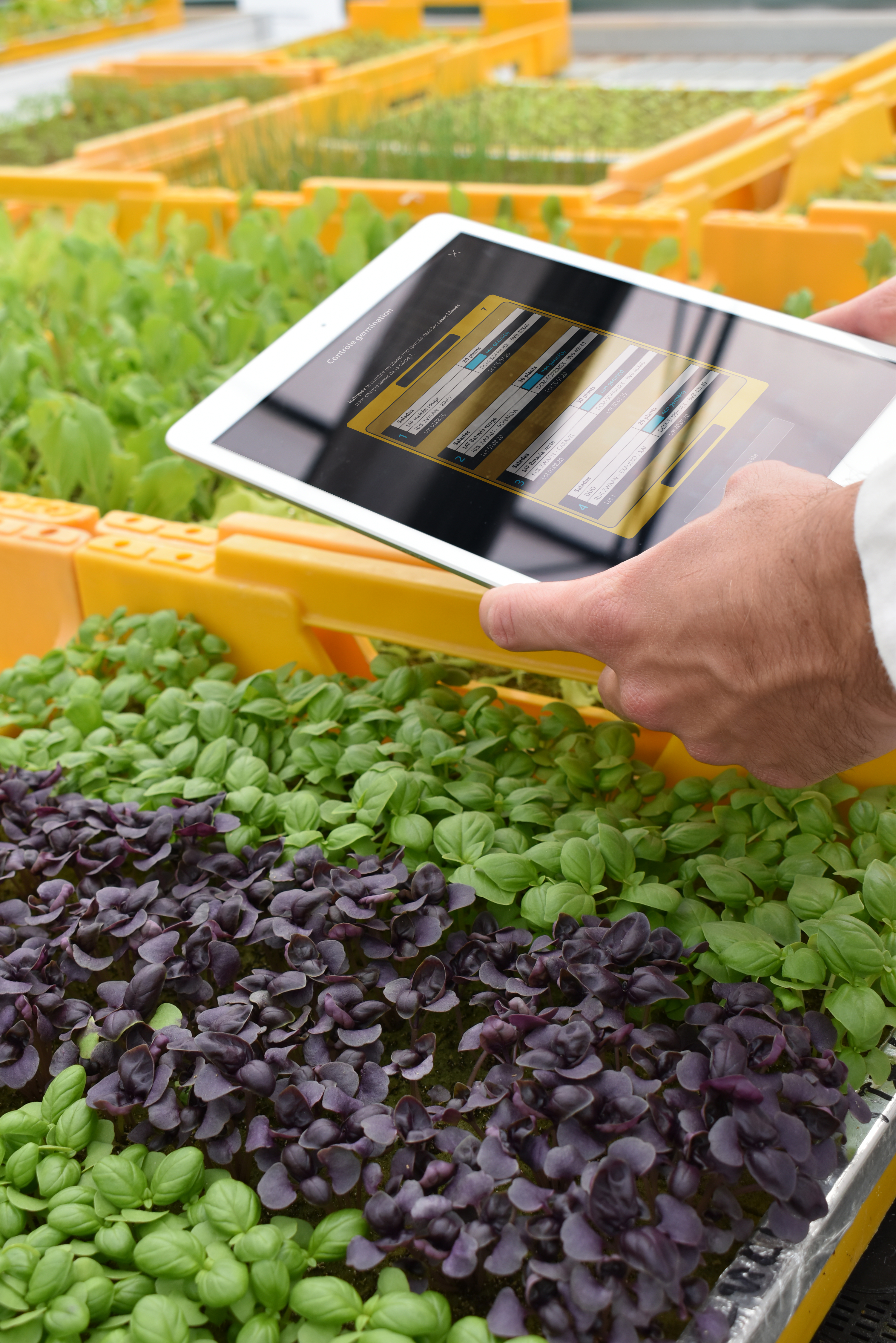 CleanGreens basil management application sustainable agriculture premium quality